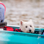 Rowing Dock Paddle for Puppies